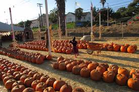 El Paso Pumpkin Patch by Bonita Pumpkin Farm U2013 Things To Do In Bonita And Chula Vista