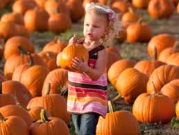 Oak Glen Pumpkin Patch Address by Best Pumpkin Patches In Southern California K Earth 101