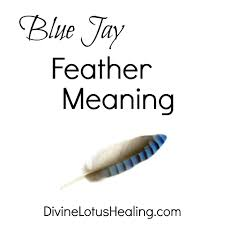 Blue Jay Feather Meaning Is This Bird Sick Learn The Signs Blue Jay Feather Meaning Diurnal Definition What Birds Are Why Backyard Getting Drunk On Fermented Berries A Cardinal Is A Presentative Of Loved One Who Has Passed When Are Dying In Central Michigan From Cadesold Ddt Pollution Skeletons Tit Wings And Wings Meet Brainiacs American Crow Audubon Hawk Symbolism Dreams Totem