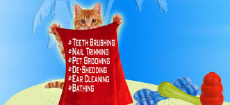 mobile cat grooming mobile pet grooming