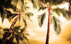 Beach Palm Trees 6980435