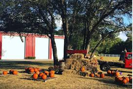 Spirit Halloween Lakeland Fl 2014 by 20 Central Florida Pumpkin Patches And Corn Mazes To Put You In