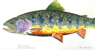 Pumpkin Seed Sunfish Pictures by Cartoons And Fish