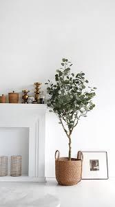 pin on plantes maison décoration