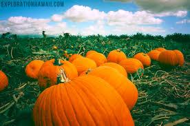 Largest Pumpkin Ever by Pumpkin Picking At The Aloun Farms Pumpkin Patch Exploration Hawaii