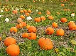 Maryland Pumpkin Patches Near Baltimore by Where To Pick Your Own Pumpkins Around Harford County Aberdeen