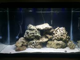 I Have 29 Lbs Of Rock And No Idea How To Aquascape! How's It ... Aquarium Aquascaping Rocks Aquascape Designs Ideas Project Reef Rock 21 Dry Walt Smith Bulk Supply Review Real Generation 4 Digitalreefs News Info How To Live Purple Live Rock Youtube Updated Clear Pics Newbies Attempt At Aquascaping So Far 3reef Design Aquafishvietcom Bring Back The Wall News Builders Keeping Austin Club Walls For A Tank Callorecom River Suggestion Planted Forum