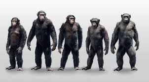 Concept Art : Dawn Of The Planet Of The Apes Closer Look Dawn Of The Planet Apes Series 1 Action 2014 Dawn Of The Planet Apes Behindthescenes Video Collider 104 Best Images On Pinterest The One Last Chance For Peace A Review Concept Art 3d Bluray Review High Def Digest Trailer 2 Tims Film Amazoncom Gary Oldman