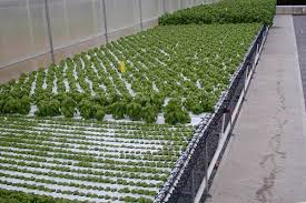 American Hydroponics NFT Systems - GROZINEGROZINE Hydroponic Home Garden Backyard Food Solutionsbackyard Oc Aquaponics Project Admin What Is Learn About Aquaponic Plant Growing Photos Friendly Picture With Amusing Systems Grow 10x The Today Bobsc Ezgro Amazoncom Vertical Gardening Vegetable Tower Indoor Outdoor From Fish To Ftilizer Greenhouse Im In My City Back Yard Yes I Am Satuskaco