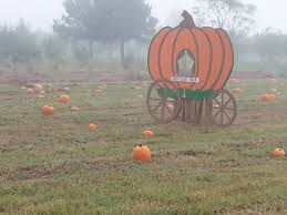 Pumpkin Patch Houston Tx Area by Fall Activities