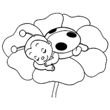 Ladybug Sleeping On Flower L For Coloring Page