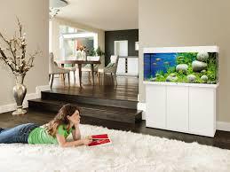 aquarium richtig einrichten tipps für den start obi