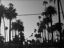 SUMMER VIBES Via Tumblr On We Heart It Palm Trees Black And White