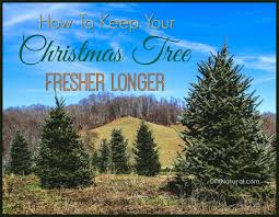 Sears Artificial Christmas Tree Stand by How To Keep A Christmas Tree Fresh