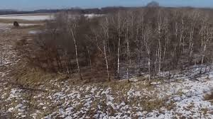 Scouting Whitetail Deer Part 3 Bedding Areas VIDEO