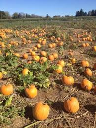 Pumpkin Picking In Chester Nj by Riamede Farm In Chester New Jersey For Apple Picking Pumpkin