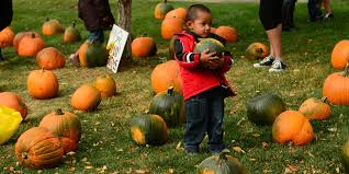 Pumpkin Patch Mobile Al 2015 by Visiting The Pumpkin Patch Expectation Vs Reality Huffpost