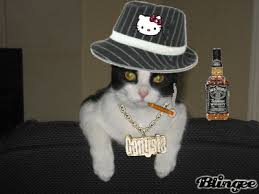thug cat thug cat picture 101945551 blingee