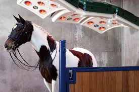 Infrared Lamp Therapy Benefits by Alternative To Equine Laser Therapy Q Line Solariums