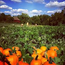 Maryland Pumpkin Patches Near Baltimore by 10 Best Pumpkin Patches In Maryland That Are Perfect For Fall
