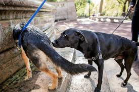 My Dog Stinks And Sheds A Lot by Learning From Dogs As They Sniff Out Their World The New York Times