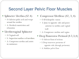 introduction to pelvic floor physical therapy ppt download