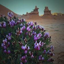 Goblins and desert flowers Picture of Goblin Valley State Park
