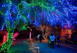 Colorful Phoenix Arizona Zoo Lights At The Phoenix Zoo Arizona