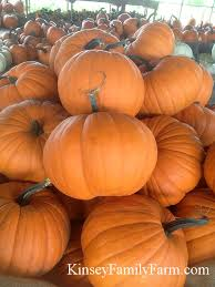 Types Of Pumpkins For Baking by Pumpkin Patch