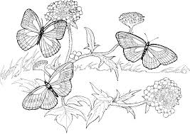 2449 Ide Coloring Pages Hard Butterfly 12 Best Download