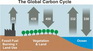 Define The Word Carbon Sink by How Do Human Co2 Emissions Compare To Natural Co2 Emissions