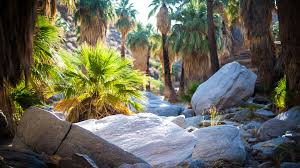 best oasis hikes in greater palm springs