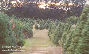 Pinecrest Christmas Tree Farm by Catchy Collections Of Christmas Tree Farms In Indiana Fabulous