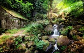 100 Water Fall House Wallpaper Forest Stones Thickets Vegetation Waterfall