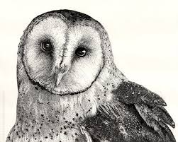 Finished My Barn Owl Drawing - Album On Imgur Pencil Drawings Of Old Barns How To Draw An Barn Farm Owl On Branch Drawing Tattoo Sketch Original Great Finished My Barn Owl Drawing Album On Imgur By Notreallyarstic Deviantart Art Black And White Panda Free Tree Line Download Linear Vector Hand Stock 263668133 Top Theme House Clipart Photos Country Projects For Kids Sketching Tutorial With Quick And Easy Techniques Of A Silo Ideals Illinois Experimental Dairy South