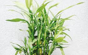 Best Plant For Windowless Bathroom by Plant Indoor Office Plants Flowers And Care Amazing Best Office