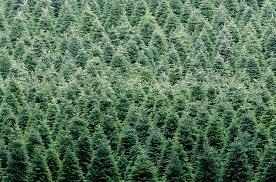75 Douglas Fir Artificial Christmas Tree by Christmas Trees Artificial Holiday Time Prelit 7u0027 Duncan Fir