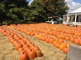 Best Pumpkin Patch Snohomish County by 13 Best Pumpkin Patches Usa Images On Pinterest Farms Pumpkin