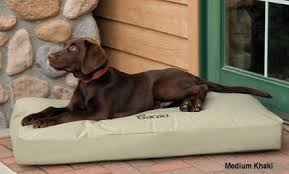 6 indestructible dog beds for chew tastic dogs rover com