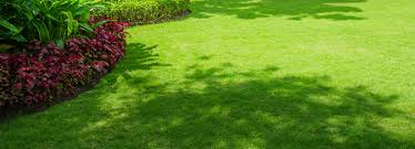 Carpet Grass Florida by Lawn Care How To Grow Grass In The Shade Bayer Advanced