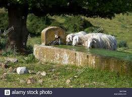 Horse Water Trough Bathtub by Italy Water Trough Stock Photos U0026 Italy Water Trough Stock Images