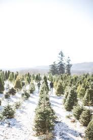 Medina Tn Pumpkin Patch by 238 Best Christmas Tree Lot Images On Pinterest Christmas Tree