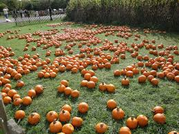 Nearby Pumpkin Patches by Fall Fun In And Around Nyc Apple And Pumpkin Picking Corn Mazes