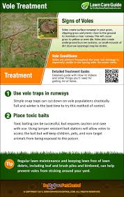 How To Get Rid Of Voles | Vole Control, Treatment & Removal Bugster Bugs Pest Control Wordpress Theme For Home Mice Rodent Nj Get Free Inspection By Licensed Layla Mattress Review Reasons To Buynot Buy 2019 Mortein Powergard Flea Crawling Insect Bomb 2 X 150g 1count Repeller 7 Steps A Healthy Lawn Pride Holly Springs Sameday Service Triangle Family Dollar Smartspins In Smart Coupons App Spartan Mosquito Eradicator Yards Pack Rottler Solutions Experts In St Louis