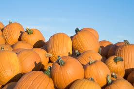 Hulled Pumpkin Seeds Calories by Pumpkin Seeds Nutritional Facts Livestrong Com