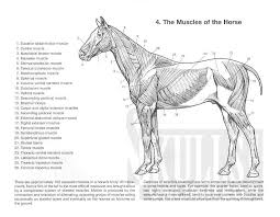 Record Variant Php Website Photo Gallery Examples Horse Anatomy Coloring Book