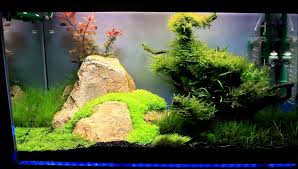 Aquascape Com Best Of Aquascape Tutorial Guide Continuity By James ... Awesome Aquascaping Gallery Iiac European Aquascape Channel Aquascapes Homedesignpicturewin Aquascaping Tutorial Aqurios Para Decorao Pinterest Big Tutorial Guide Continuity By James Findley The Indonesia Green Machine Ada Aquarium Acuarios Aquariums Best Of Aquascapes Fabuluxedecor Natural Iwagumi Scottish Grass Size 40x25h Lab Undergrowth Wood Tank 130l Aquadesign