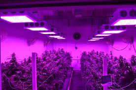 led grow bulbs spectrum led grow light bulbs most led grow