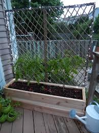 Hops Garden Trellis Plans Gardening Flower And Vegetables
