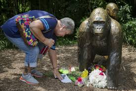Brookfield Zoo Halloween Parade by Killing Of Gorilla To Save Boy At Ohio Zoo Sparks Outrage
